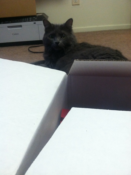 Beth likes to sit behind boxes. Weirdo.
